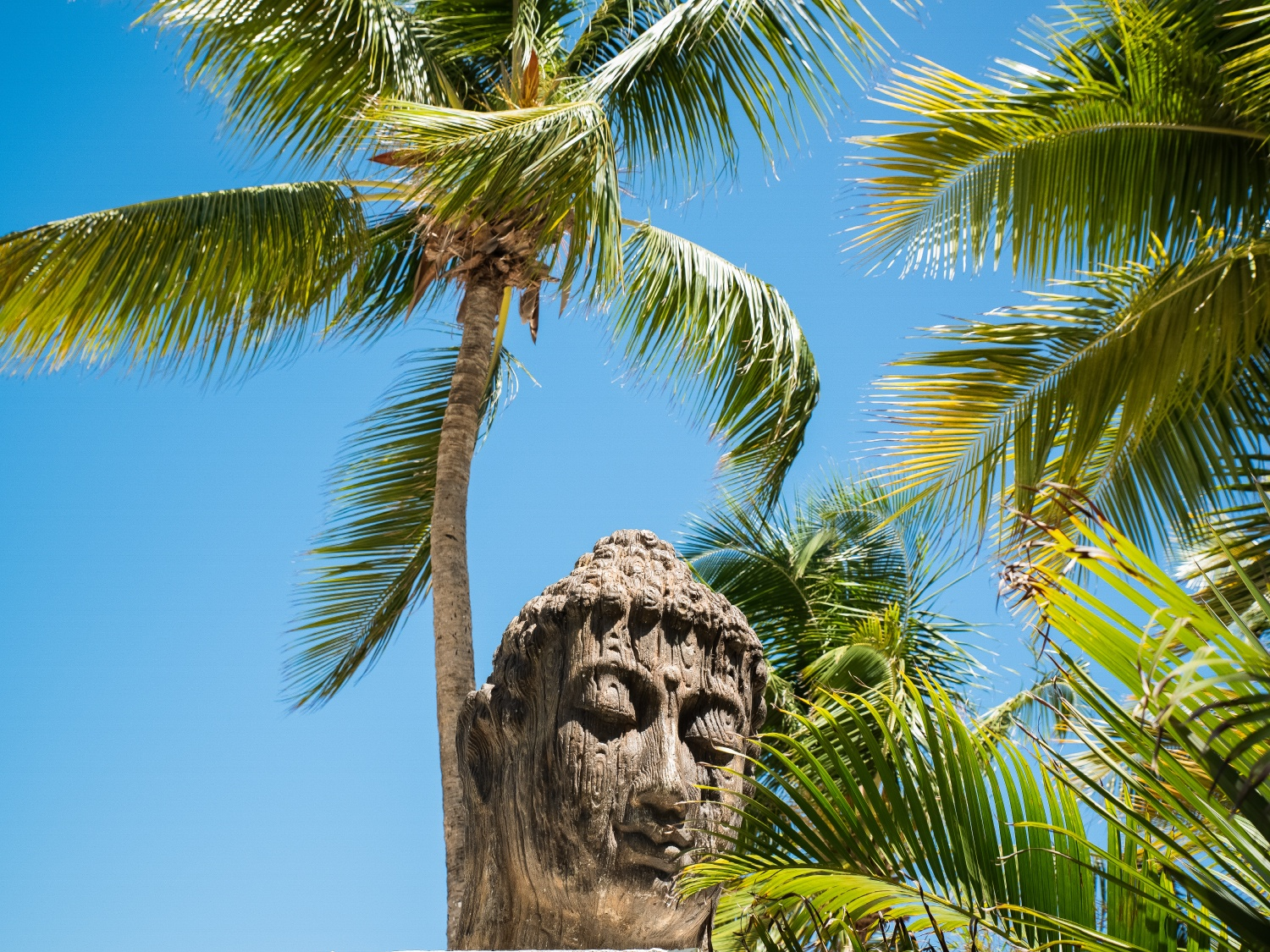 palm trees buddha