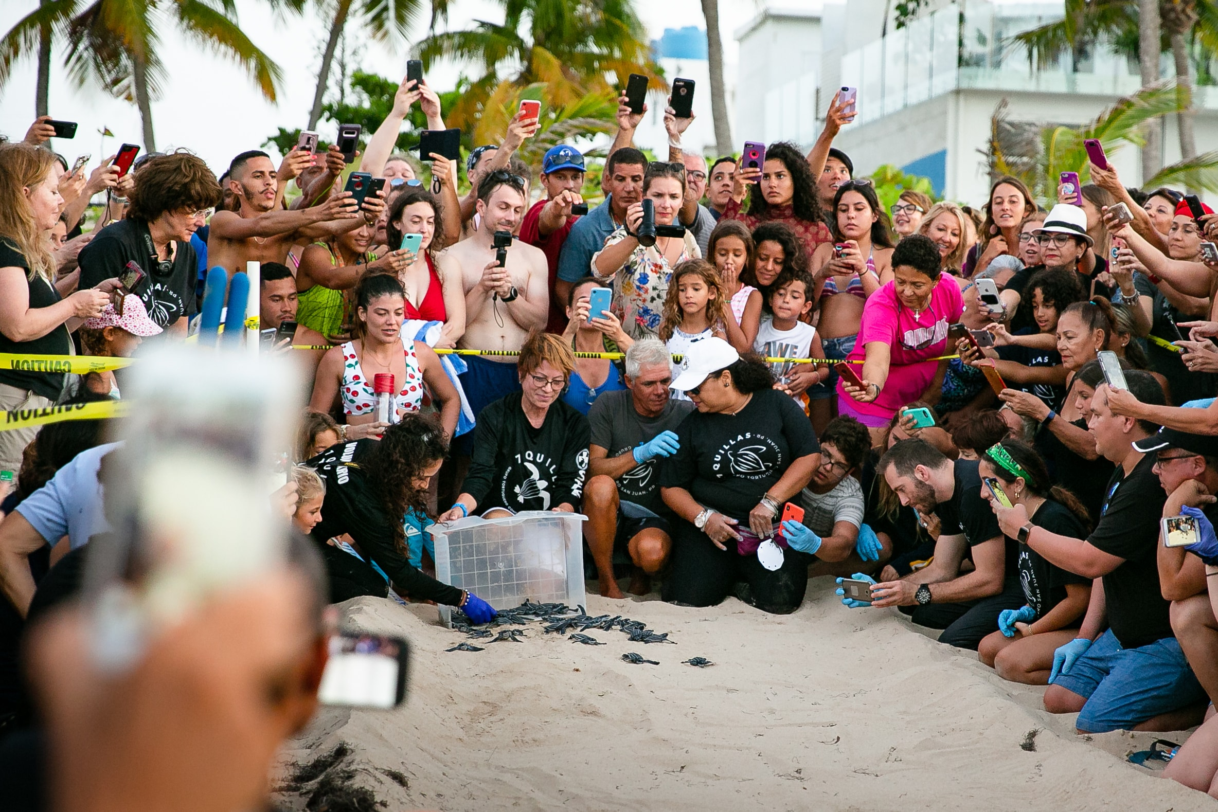 A crowd watches turtles in Puerto Rico.